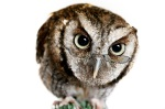 WordWiseOwl1 resized